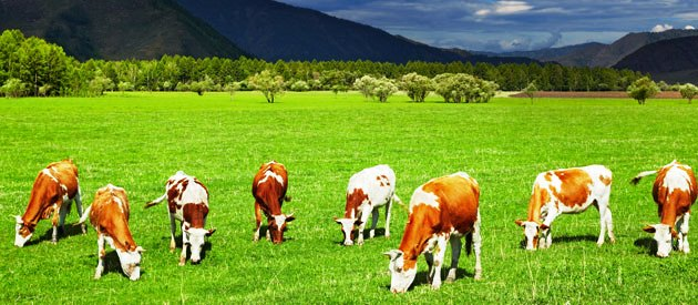 Good grazing farmland