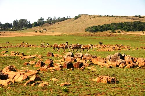 Vryheid is surrounded by a nature reserve