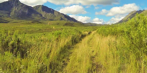 Tall grass and many river crossings