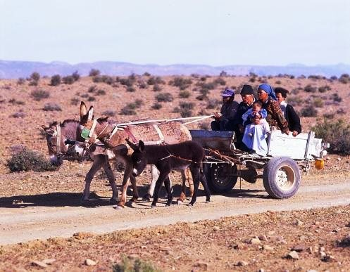 Donkey carts are still used in the Karoo