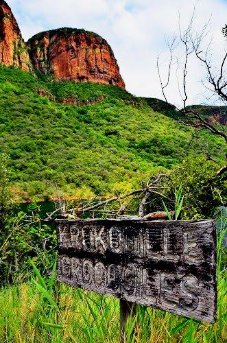 Crocodile warning sign