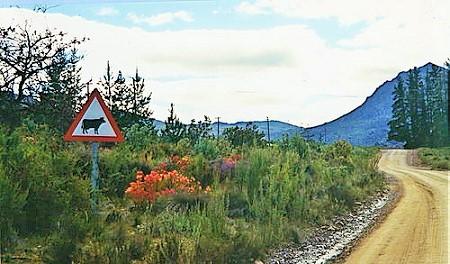 Buffelshoek Pass - southern approaches