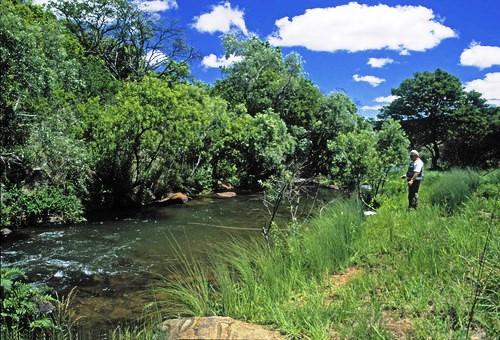Spekboomrivier offers trout fishing in clear waters