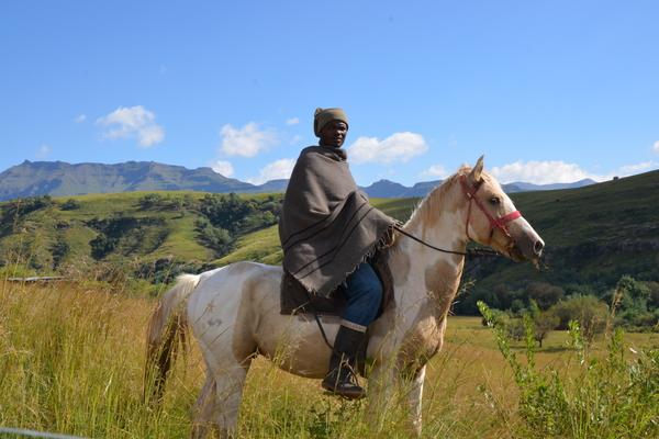 Cattle herder on horseback