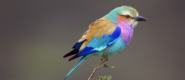 Sublime birdlife in North West province