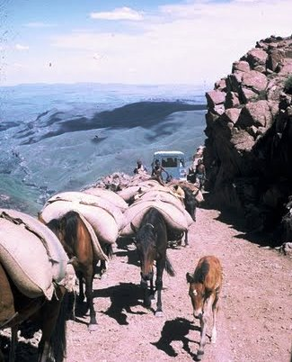 Donkeys on Sani Pass