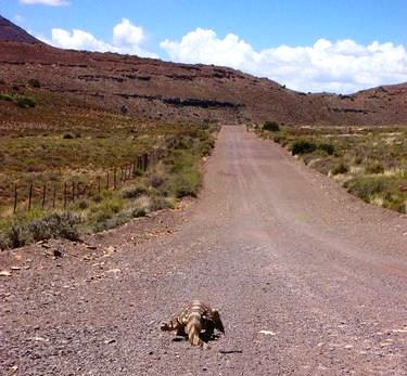 The Karoo back roads are full of surprises
