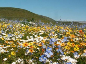 Wildflowers near the pass