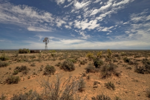 Karoo semi desert vegetation