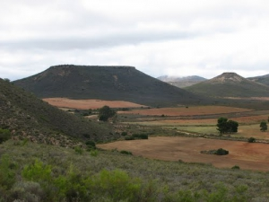 Koppies near Uniondale