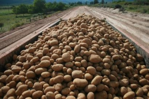 Pure potato country