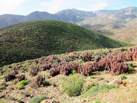 Helskloof Pass (Richtersveld)