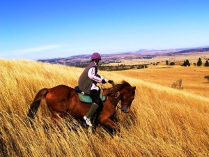 Equestrian activities near Newcastle