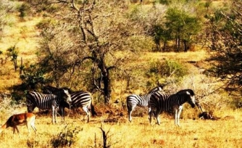 Plenty of game in the Dolonyana Game Reserve