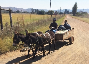 Donkey cart in Tonteldoos