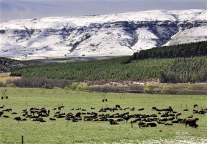 Its close to the Drakensberg