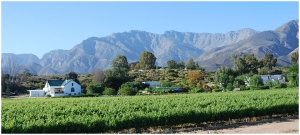 Wine farms grace the banks of the Breede River