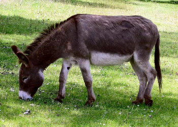 The pass has a close connection with the humble donkey