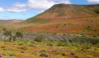 Klipfonteinrant Pass - a good place to see wild flowers