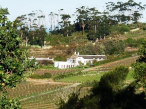 Wine farm off Constatntia Nek