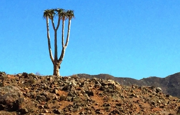 The Richtersveld in all its awesome glory